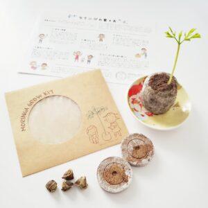 モリンガ栽培キット