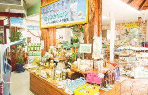 与論島のモリンガ土産はサンコーラルがおすすめ。